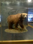 Huge Alaskan Brown Bear which greets visitors at the Anchorage airport